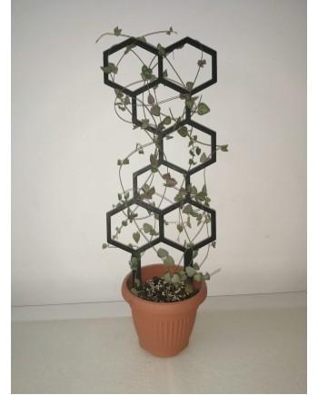 Hexagon - flower ladder